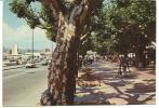 Var :  ST  RAPHAEL  : Le  Cours  1984 - Saint-Raphaël