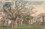 Cpa Dakar Forêt De Boababa Dans La Plaine De Ouakam - Sénégal