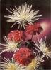 España--Fantasia Flores---metalizada - Flores