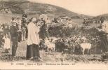 CORSE  ( 20 ) -  Scènes Et Types  - Bénédiction Des Moutons - Frankreich