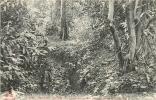 COCHINCHINE TONKIN YEN-THE TRANCHEES CREUSEES PAR DES PIRATES DANS LA FORET  EDIT DIEULEFILS - Vietnam