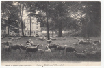 Putte - Zicht Aan 't Ravenhof - Schapen - 1913 - Uitg. F. Hoelen, Cappellen Nr 4818 - Gestuurd Naar Mechelen België - Pays-Bas