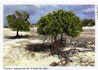 TAAF îles éparses EUROPA Mangroves Au Bord Du Lagon  (carte Provenant Du Carnet Lucia Simion) - Unused Stamps