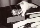 CPM Carte Noir & Blanc Ed. Graphique De France 15 X 10,5 Cm - Cat Studies / Chat Chaton Livres études - Chats