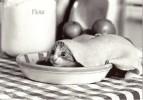 CPM Carte Noir & Blanc Ed. Graphique De France 15 X 10,5 Cm - Kitty Pie / Chat Tarte Pâte Cuisine - Chats