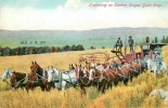 Harvesting An Eastern Oregon Grain Crop. Attelage De Moissonneuse. Dos Simple. 2 Scans. - Attelages