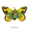 Carte Postale Anne Geddes Bébés 14x14 Cm + Enveloppe - Bébé Papillon Vert Jaune - Non Classés