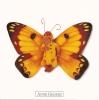 Carte Postale Anne Geddes Bébés 14x14 Cm + Enveloppe - Bébé Papillon Jaune Marron - Non Classés