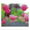 CPM Carte Postale Fleurs Sauvages 12x12cm - Tulipe - Fleurs, Plantes & Arbres