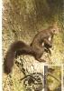 ROMANIA / MAXI CARD / Squirrel - Sellos