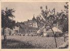 Calmpthout (Colonie Kinderwelzijn) - De Moestuin - Kalmthout