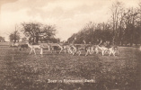 Deer In Richmond Park - London Suburbs