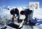 TAAF..PECHEURS...CPM - TAAF : Terres Australes Antarctiques Françaises