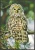 Estland Estonia Estonie. Eule Owl. Sauber Unbenutzt Unused 2009 - Estonia