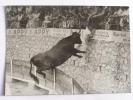 LUNEL , Le 22 AOUT 1960, Course Libre , Le Cocardier JOFRE Sur SOLER - Lunel