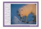 Cp, Animaux, Renard, Artic Fox - Animals