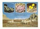 Cp, Animaux, Rennes, Norvège, Svalvard, FLora Og Fauna, Multi-Vues - Animals