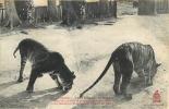 COCHINCHINE TONKIN TIGRES DU MASSIF MONTAGNEUX - Vietnam