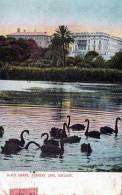 Black Swans, Torrens Lake, Adelaide SA - Posted 1907, See 2nd Scan - Adelaide
