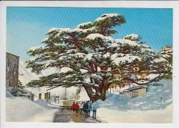 LIBAN Lebanon - Les Cèdres Sous La Neige - Cedars Zedern - Jolie CPSM GF N° 987-198 - Liban