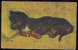 Dog   DACHSHUND    1918.      Old Postcard - Dogs