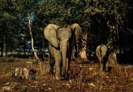 Elephant - Chateau De Thoiry - Elephants