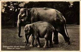 Elephant, Elefant Mit Jungem - Zoologischer Garten Basel - Elefanti