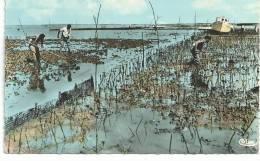 L'Ostréiculture En Charente Maritime  Grattage Des Huitres Sur Les Parcs En Mer à Marée Basse Les Pointusn - Visvangst