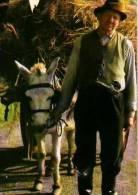 Mayo     Bringing Home The Hay  . - Mayo
