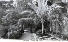 "Cartolina D'epoca - Cadenabbia - Giardino Villa Carlotta "" - Como"
