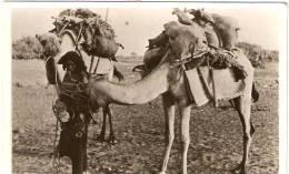 """COLONIE-ERITREA-CARTOLINA CAMMELLI"""" ANNULLO """"DIRE DAUA ARRIVI E PARTENZE"""" POCO LEGGIBILE - Eritrea"""