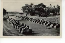 Karnak Avenue Of Sphinxes 1957 - Louxor