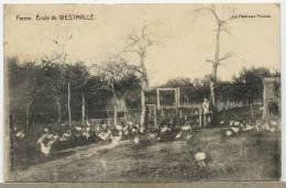 BELGIQUE  ECOLE WESTMALLE - Unclassified