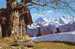 Eiger Monch Und Jungfrau - Suiza