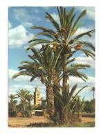Cp, Maroc, Marrakech, Vue Sur La Koutoubia, Voyagée 1981 - Marrakech