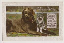 Birthday Greetings - Dog And Cat - Dogs