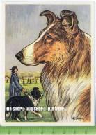 Der Schottische Schäferhund Oder Collie, C32 Austria-Bildwerk, Kamerad Hund, Serie II: Schäfer Und Hirtenhunde. - Cigarette Cards