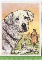Der Kuvasz, C38 Austria-Bildwerk, Kamerad Hund, Serie II: Schäfer Und Hirtenhunde. - Cigarette Cards