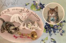 CHATS - Katzen