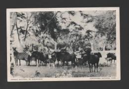 Pc MOZAMBIQUE 1966 MOÇAMBIQUE GORONGOSA NATIONAL PARK AFRICAN WILD LIFE AFRICA - Mozambique