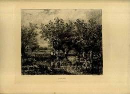 - SAU/LAIE . EAU FORTE DU XIXe S. - F. Arbres & Arbustes
