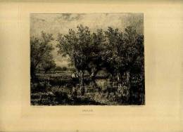 - SAU/LAIE . EAU FORTE DU XIXe S. - F. Trees & Shrub