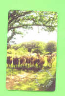 JERSEY - Magnetic Phonecard As Scan/Cows - Ver. Königreich