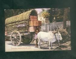 Sri Lanka - Ceylon - Colombo - Daible (Double ) Bullock Cart (animée Thé  Lipton ) - Sri Lanka (Ceylon)