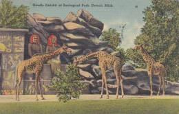 Giraffe Michigan Detroit Zoological Park