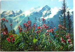 MASSIF DU MONT BLANC LA FLORAISON DES PHLOX SAUVAGES  - EDITIONS YVON - CPSM ECRITE 1972 NON TIMBREE CORRECTE - Chamonix-Mont-Blanc