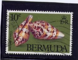 Bermuda, 1981,  USED  # 419,  CONUS SPECIES - Bermudes