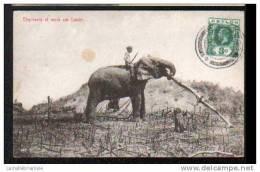 ELEPHANTS AT WORK ON ESTATE - CARTE AVEC TIMBRE - Sri Lanka (Ceylon)