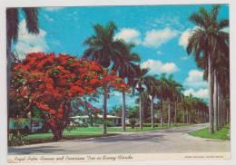 ROYAL PALM AVENUE AND POINCIANA TREE IN SUNNY FLORIDA - AL - Tampa