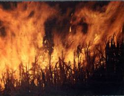(301) Queensland - Sugar Cane Firing - Andere
